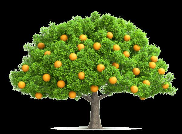 leichter Kunden gewinnen - Eine Marke ist wie ein Baum